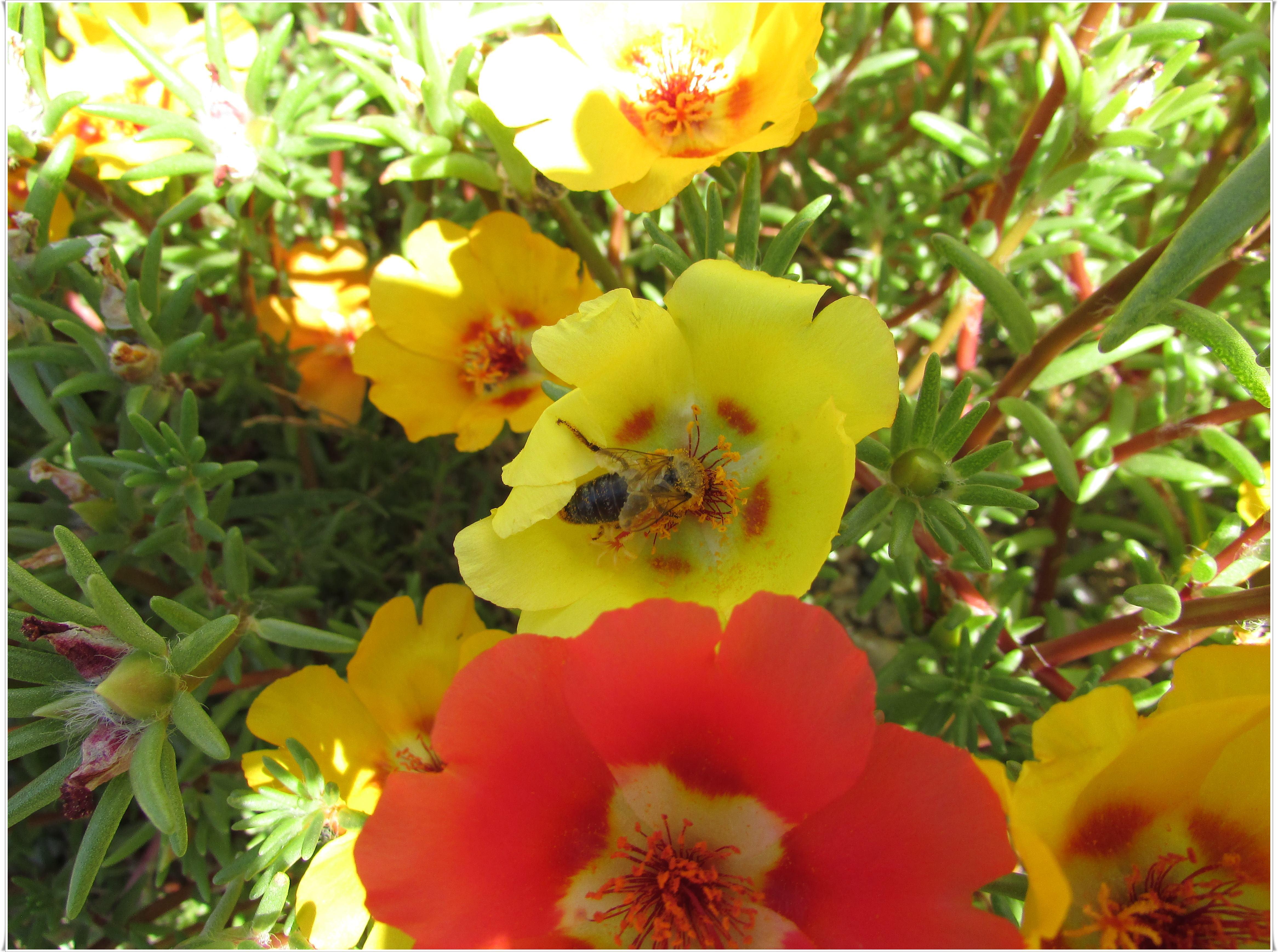 Nikola Tomašić - Busy bee