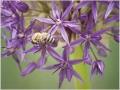 Vesna Spoljar - Na ljubicastom cvijetu