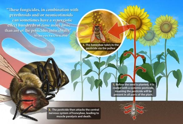 pcele i pesticidi